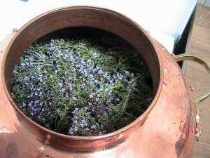 alambí per extreure oli essencial de romaní